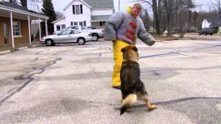 Mans  Best Friend Protection Training