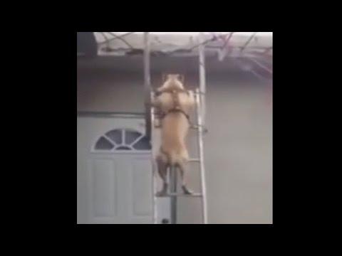 Собака спускается по лестнице