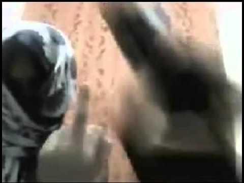 Wasmo Life Eh   VidoEmo   Emotional Video Unity thumbnail