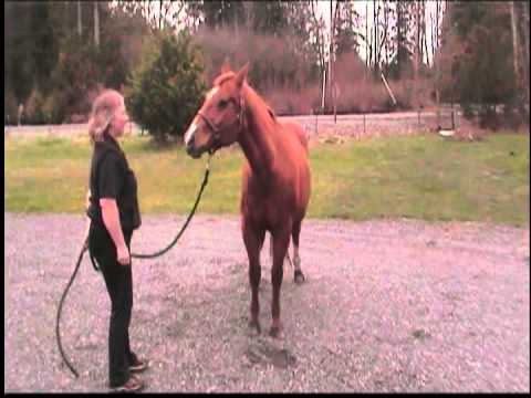 Snickers The Talking Horse