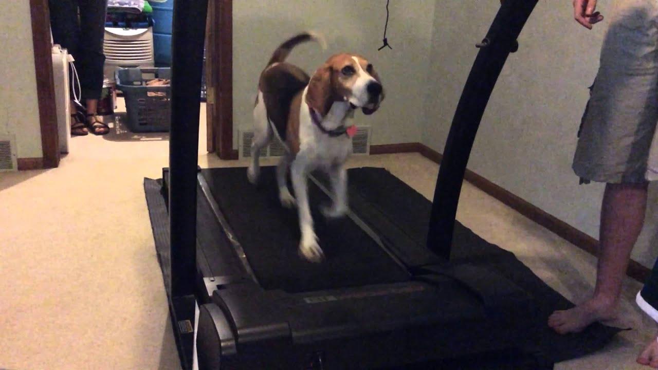 Funny dog on treadmill - YouTube