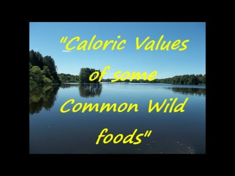 """""""Live or Die Off the Land Series"""" - """"Caloric Values of some Common Wild foods"""""""