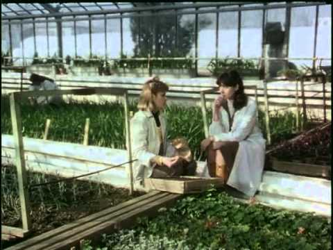 Underground. Subtitulada en castellano. Emir Kusturica 1995. from YouTube · Duration:  2 hours 43 minutes 12 seconds