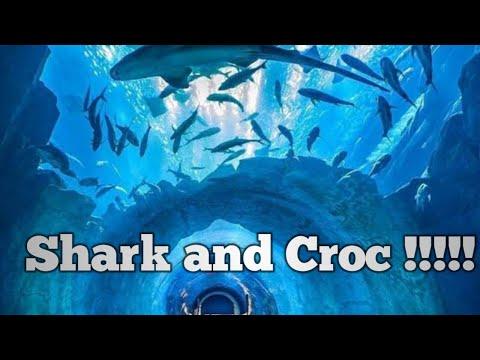 Dubai aquarium- Shark and Crocodile – Underwater zoo