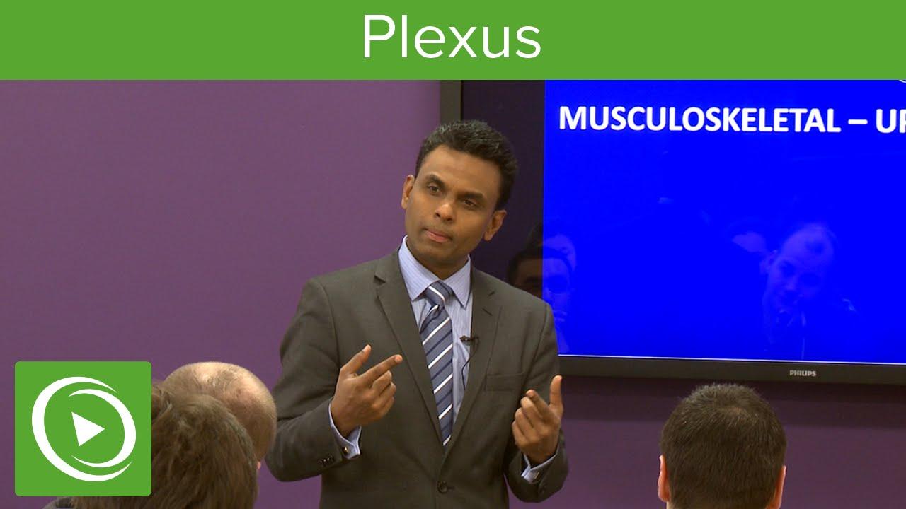Plexus: Structure & Overview – MRCS | Lecturio