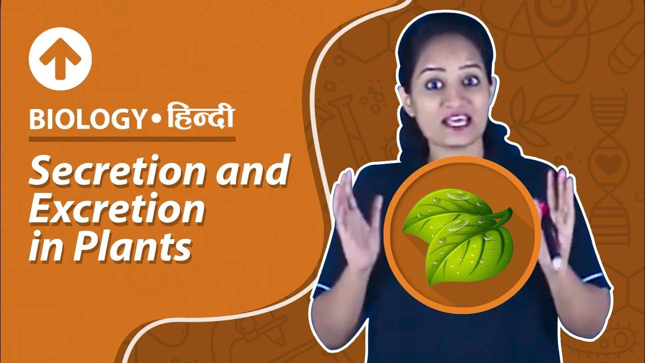 Respiration: Types, ATP, Human Respiratory System, Videos, Examples