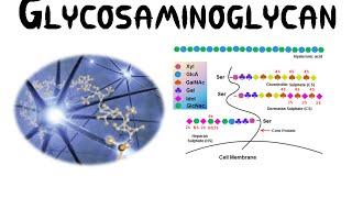 Glycosaminoglycans (GAGs)