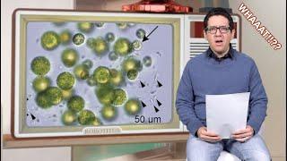 Descubierta Alga con 3 Sex0s
