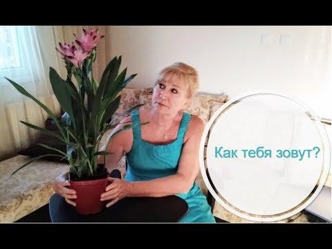 Как найти название растения по фото