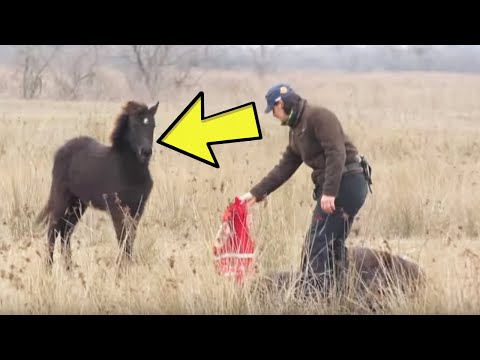 This Wild Horse Patiently Waited To Thank His Rescuer In The Most Heartwarming Way