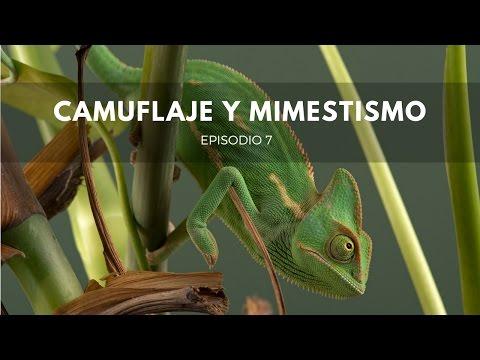 Camuflaje y Mimetismo: Orígenes #7