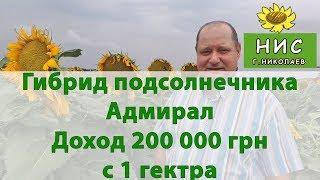 Гибрид подсолнечника Адмирал. Доход 200 000 грн
