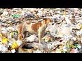 hyd dump yard in india