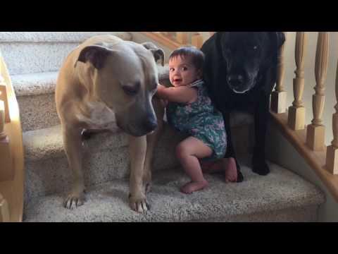 Dog won't let baby pass
