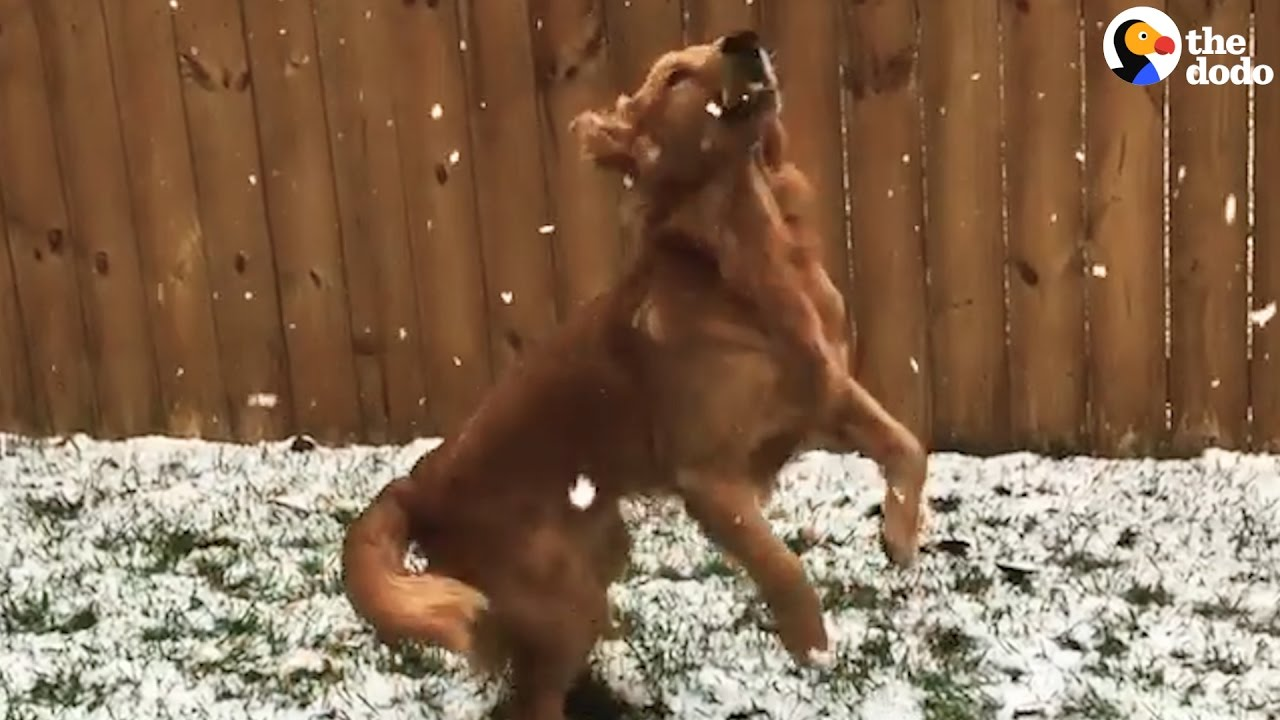 Dogs Experiences Snow For The First Time | The Dodo