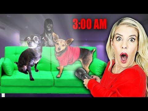 don't-wake-up-your-dogs-up-at-3am!-(overnight-challenge)-|-pawzam-dogs