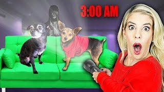 DON'T WAKE up Your Dogs up at 3AM! (Overnight Challenge) | PawZam Dogs