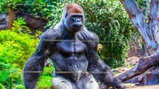 أقوى 10 حيوانات في العالم ، أقوى بـ 15 مرة من الانسان البالغ