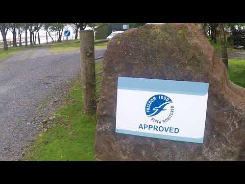 Scottish Salmon Watch Reports From The RSPCA Assured Scottish Sea Farms In Loch Spelve
