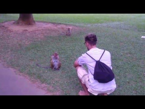 sri_lanka_2015-feeding monkey