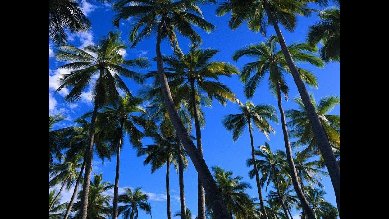 Mix compas zouk kompas zouk haitien troubadou mix by dj lacroix 971 2014 youtube - Free palm tree screensavers ...