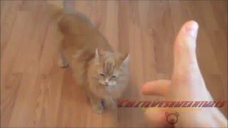 【超おもしろ猫】猫大好き!こんな猫ほしい! funny Cats Compilation ...
