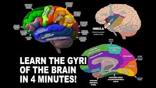 GYRI OF THE BRAIN - LEARN IN 4 MINUTES