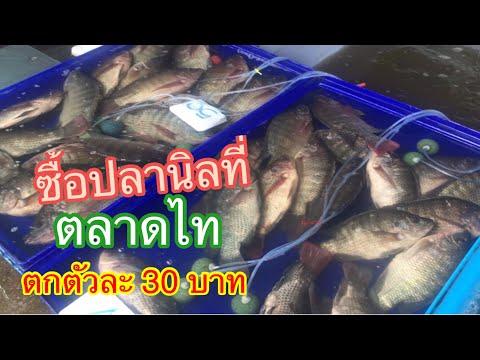 #เดินเลือกซื้อปลานิลที่ตลาดไท#ตลาดไท#ตลาดปลาตลาดไท