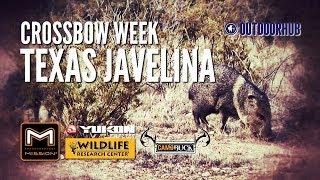 Texas Javelina Crossbow Kill - Crossbow Week 2013