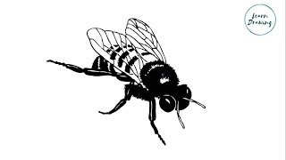 How to Draw a  House Fly step by step  Learn Easy and Simple Drawing