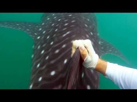 Swimming with Sharks & Offshore Kayak Fishing | Field Trips Panama