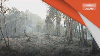 Kebakaran Hutan | Kawasan hutan ke Cameron Highlands terbakar