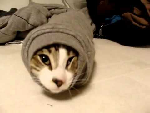The Burrito Cat Youtube