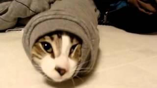 The burrito cat