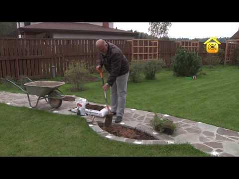 видео: Нюансы осенней посадки цветов в клумбы-карманы и под газон // forumhouse