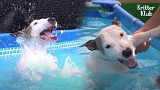 Nadie puede detener a Walter, el perro Bull Terrier, nadando (Parte 2) | Kritter Klub