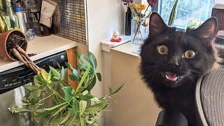ПРИКОЛЫ С ЖИВОТНЫМИ Смешные Животные Собаки Смешные Коты Приколы с котами Забавные Животные 84