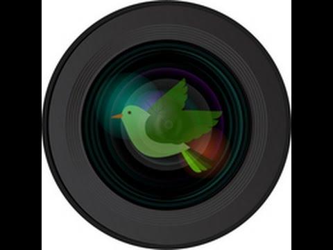 Allen BirdCam Live Stream
