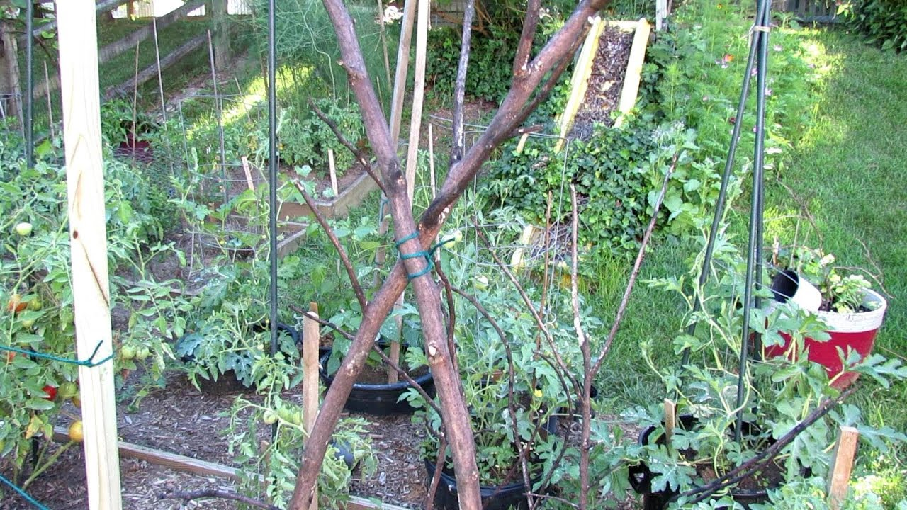 How to Make Inexpensive/Free Trellises for Your Vegetable Garden: Basic Materials, Tools & Designs