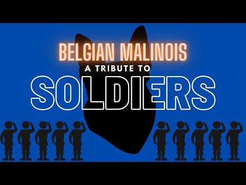 DANGER: Belgian Malinois Soldiers