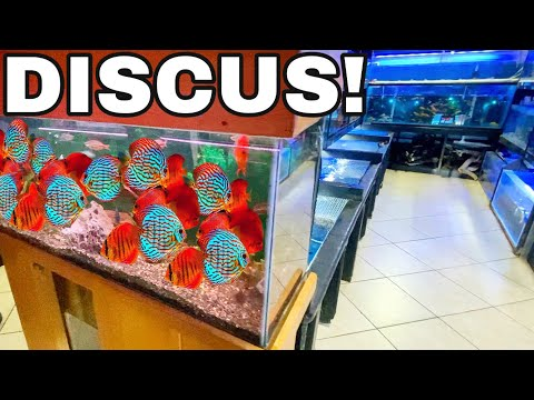 Tropical Fish Breeding Flea Market For Koi, Cichlids, Discus, And More!