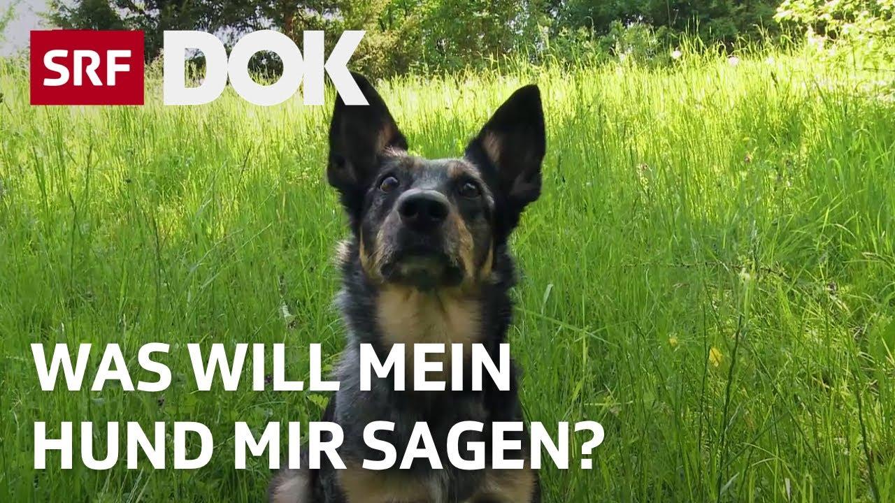 Download Mit Tieren sprechen | Über die Möglichkeiten der Tierkommunikation | Doku | SRF Dok