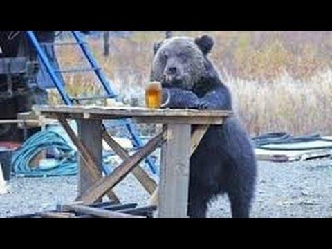 Медведь и КамАЗист смотреть видео прикол - 7:58