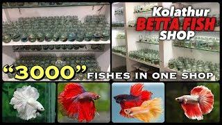 A Trip of Kolathur Betta Fish Shop | Tamil |
