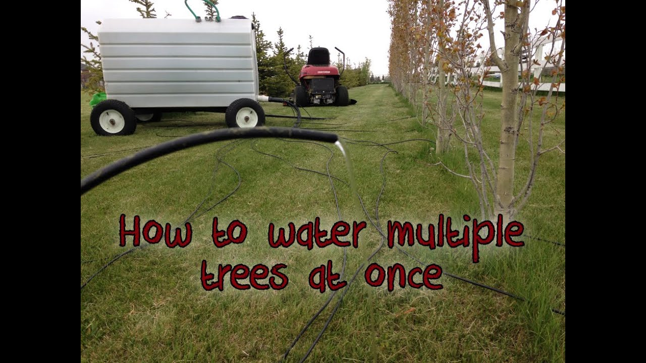 How To Water 12 Trees At Once Portable Gravity Fed