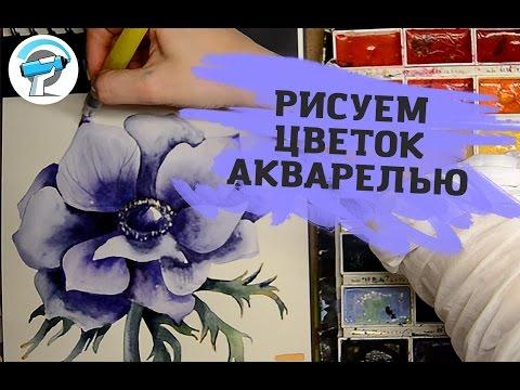 Как Нарисовать Цветок Акварелью | Уроки рисования акварелью от Ирины Сарт
