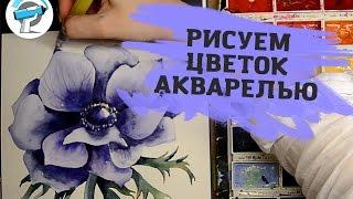 Как Нарисовать Цветок Акварелью | Уроки рисования акварелью от Ирины Сарт(В этом уроке мы будем учиться рисовать цветок акварелью. Перед тем как приступить к рисованию желательно..., 2016-02-11T09:26:28.000Z)