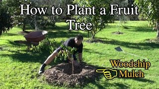 How to Plant a Fruit Tree in the Backyard with Woodchip