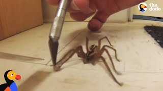 Guy Helps Wolf Spider Untangle His Feet | The Dodo
