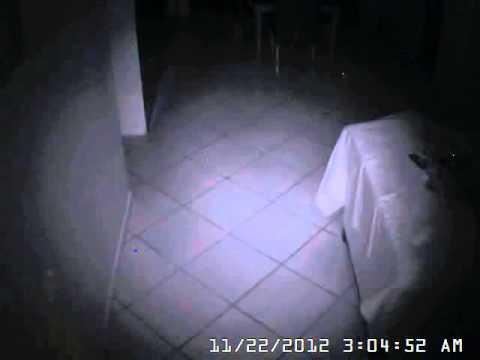 rats running around house